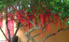 许愿树 (el árbol de los deseos)